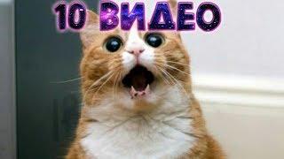 ТОП -10 САМЫХ СМЕШНЫХ  видео про КОТОВ