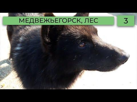 Медвежьегорск, Карельский лес. Путешествие | Видео лог 3