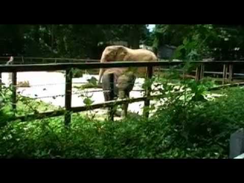 Baltimore Zoo Elephants - June 30, 2009