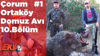 Çorum Ortaköy Domuz Avı 1 Ekip İşi 10.Bölüm Yaban Tv Wild Boar Hunting