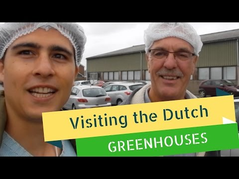 Visiting the greenhouses in Holland - How are produce get's produced!