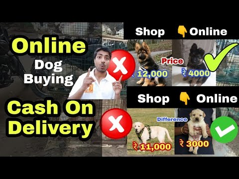 Buy Pets Online India Cash On Delivery