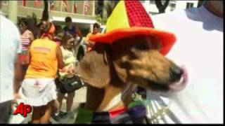 Raw Video: Costumed Pets on Parade in Rio
