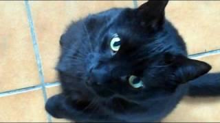 My Three Legged Cat Thumbnail