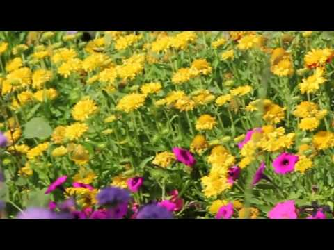 Dubai Miracle Garden 2