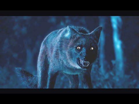 CGI Dog Sequence