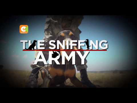SPECIAL FEATURE   Mara Sniffing Army