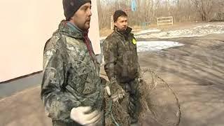 Отлов собак в Красноярске