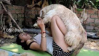 Fantastic! Beautiful Girl Give Food and Play with Funny Dog Lovely Dog Present part2
