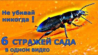 ПОЛЕЗНЫЕ насекомые. 6 яростных ЗАЩИТНИКОВ сада и огорода