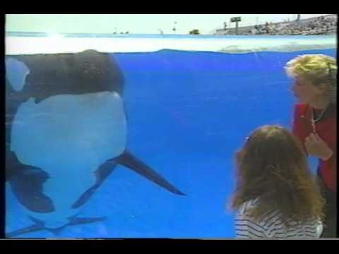SeaWorld Shamu Show 1988 staring Corky, Kandu 5, and baby Orkid.