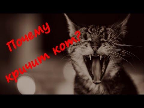 ПОЧЕМУ КРИЧИТ КОТ WHY DOES THE CAT SCREAM Как успокоить котика