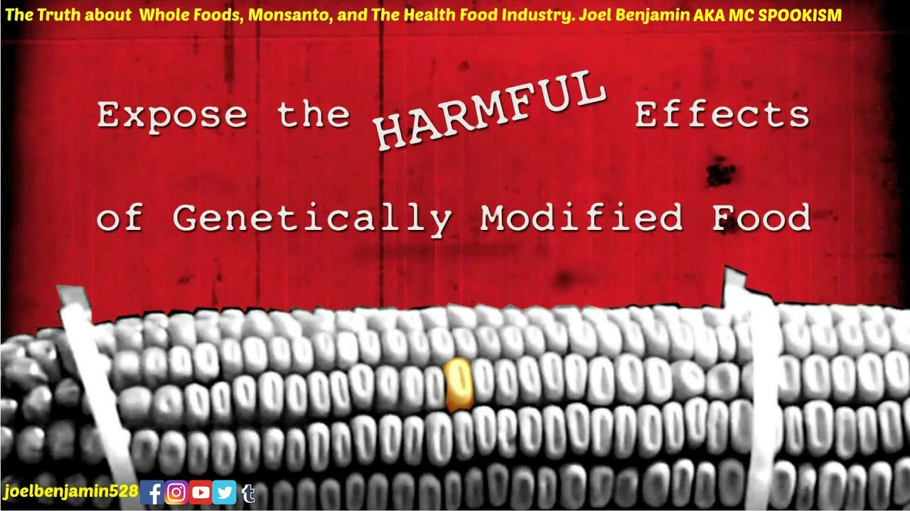 effect of genetic modified food A potentially useful technology, genetically engineered or modified food has been pushed through the us and increasingly around the world very quickly without enough time to test and reassure people that this is safe (and rushing it into the market could make it unsafe).