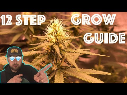 The 12 Step Weed Grow Guide:  Easily Grow Quality Cannabis from the comfort of your Home!