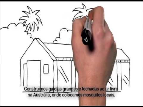 Fiocruz desenvolve método que impede Aedes aegypti de transmitir vírus