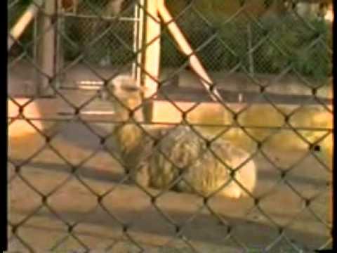 03-1991 - Noviembre - Zoo BsAs, Quinta Jorge Cerutti, Dafne y Santiago