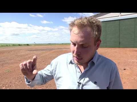 Milho: saiba como produzir 200 sacas por hectare