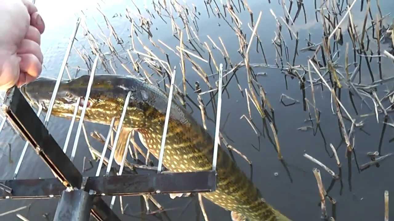 Как можно поймать быстро рыбу