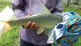 Fantastic Mrigal Fishing Videos By Fish Watching