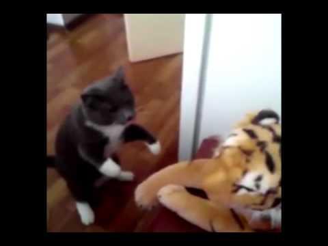 Кот реально ненавидит тигров