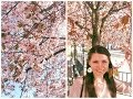 Vlog японская вишня в Стокгольме Kungsträdgården mp3