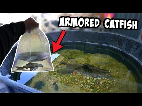 NEW *ARMORED* CATFISH For My EXOTIC POND