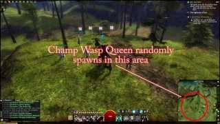Guild Wars 2 - Queensdale Champ Train / Farming Guide