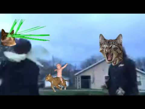 Attack of the cat!