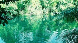 Trilha No Rio Formoso, Bonito MS, Capital Do Ecoturismo