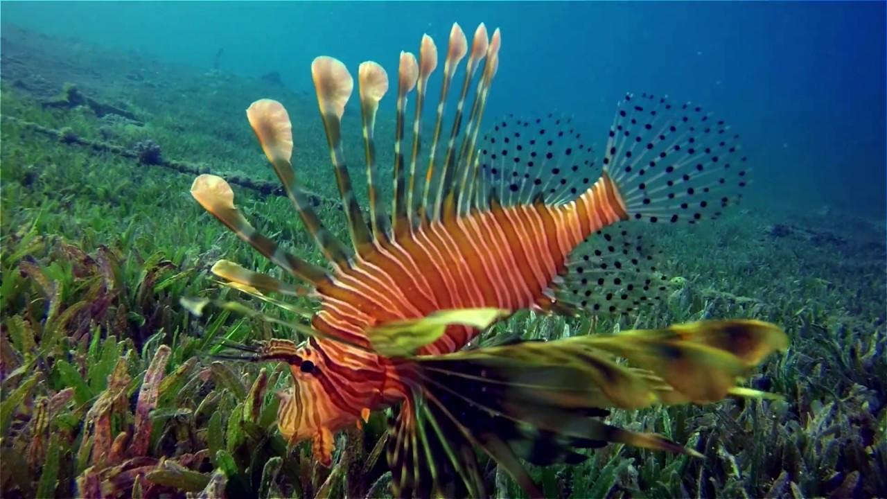 Узнавайка о рыб и картинки неопрен можно