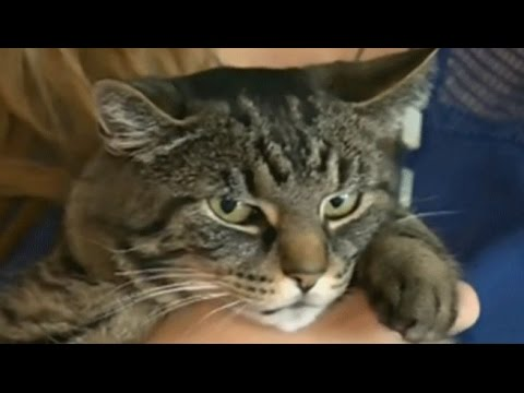 JERK CATS ★ Cats Being a Jerk (HD) [Funny Pets]