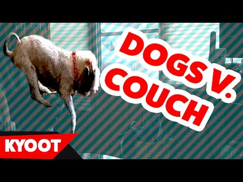 The Funniest Dog vs Couch Epic Fail Videos of 2016 Weekly Compilation | Kyoot Animals