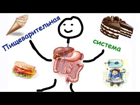 А13. В каком отделе пищеварительного тракта имеются