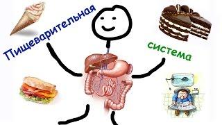 Пищеварительная система человека. Ферменты для пищеварения.То, что нужно знать, для ЕГЭ по биологии.