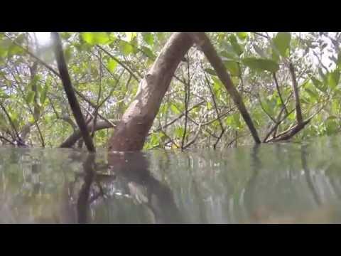 Costa Rica: Inner Space
