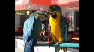 В Анапе начали изымать животных у зоо-фотографов