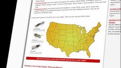 Common Types of Termites in the US - Map Extermination Methods and More