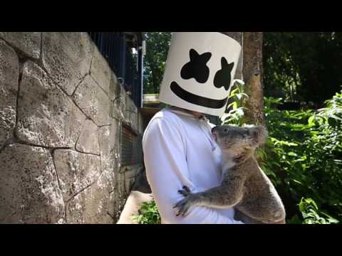 Download Youtube: Marshmello gets attacked by a Koala in Australia