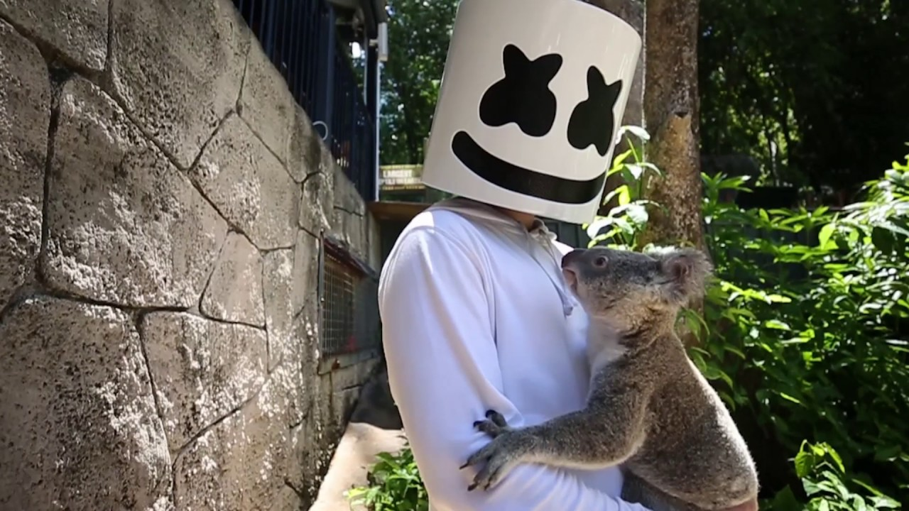 Marshmello Gets Attacked By A Koala In Australia Youtube