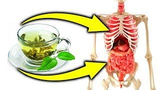 Вот что с Вами случиться, если пить зеленый чай. Опасность и польза чая