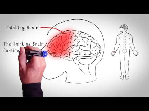 Introduction To Up Pain Down Pain Good Brain Bad Brain
