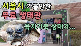 서울시 가볼만한 무료 생태관 근데 육지거북이 입과 등갑…