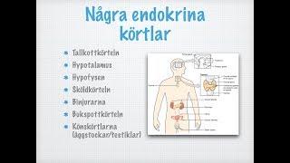 Några endokrina körtlar thumbnail