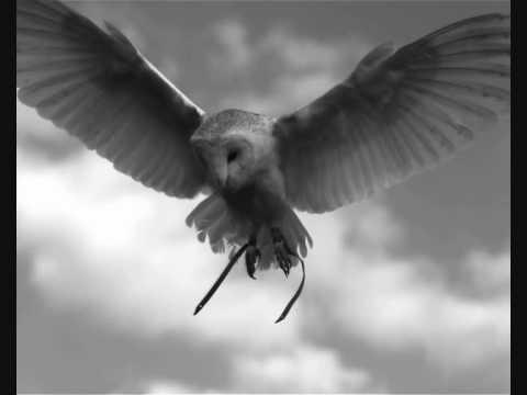 Flight by Paul Edwards
