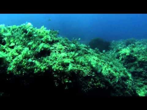 Scuba Diving Cyprus - Paphos Dive Sites - Pistol Bay With Marine Divers, Paphos