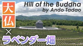 真駒内滝野霊園で巨大な「頭大仏」一般公開!@北海道札幌市