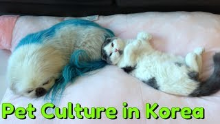 TL;DR - Pet Culture in Korea