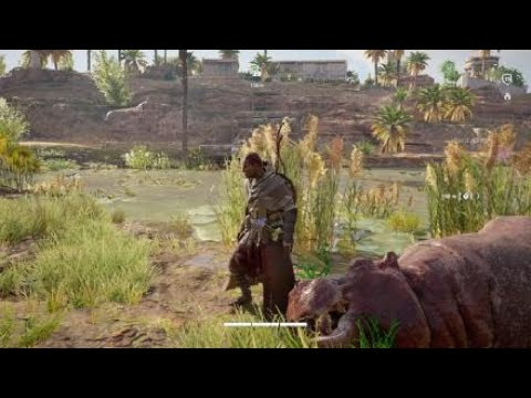 Lets Play: Hippos in Assassins Creed® Origins