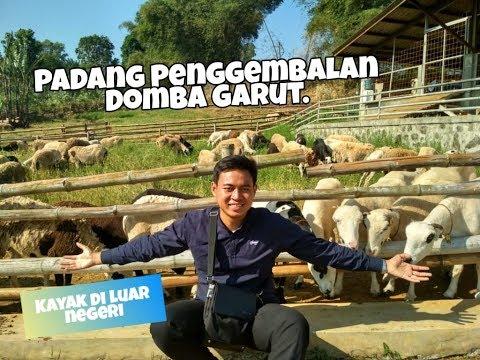 pusat-pembibitan-domba-garut!-domba-lokal-asli-indonesia..-kayak-di-luar-negeri..