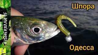 Рыбалка на СТАВРИДУ в Одессе Ловля ставриды на СИЛИКОН с БЕРЕГА 2020